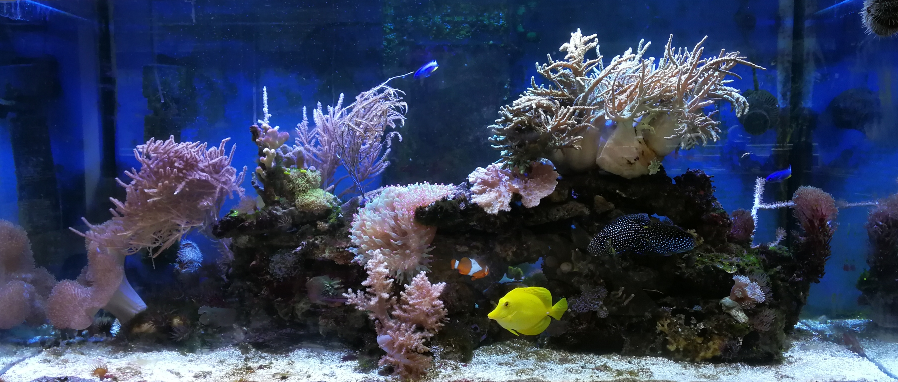 Aquarium August 2018